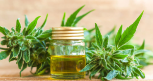 Purchasing Cbd Oil Merchant Account and Credit Card Processing Solutions