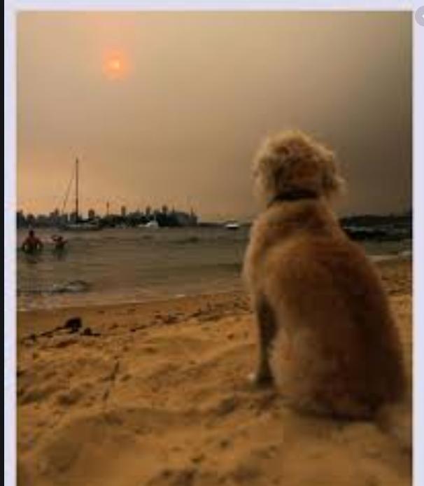 Sydney pollution labeled ''Public health emergency''