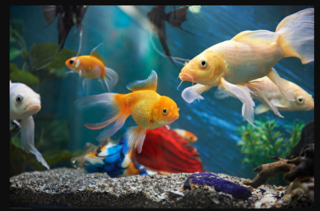 Tips For A Successful Freshwater